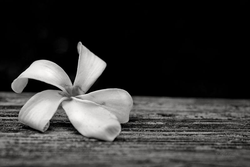Siyah Beyaz Çiçek Floral Sanat Kanvas Tablo