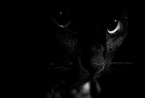 Siyah Kedi Hayvanlar Kanvas Tablo