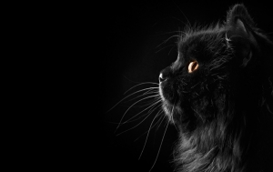 Siyah Kedi Profil Hayvanlar Kanvas Tablo