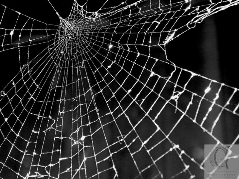 Siyah Örümcek Hayvanlar Kanvas Tablo