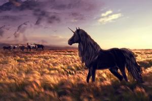 Siyah Unicorn At ve Gün Batımı Hayvanlar Kanvas Tablo