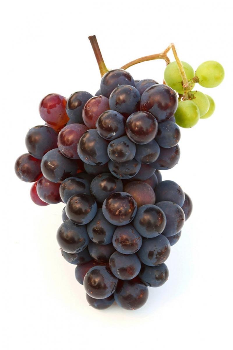 Siyah üzüm Salkımı 6 Lezzetler Kanvas Tablo Arttablo