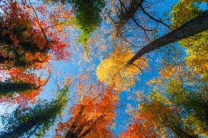 Sonbahar 3 Doğa Manzaraları Kanvas Tablo
