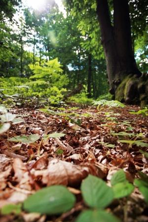 Sonbahar 4 Doğa Manzaraları Kanvas Tablo