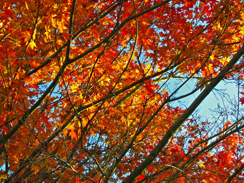 Sonbahar 2 Doğa Manzaraları Kanvas Tablo