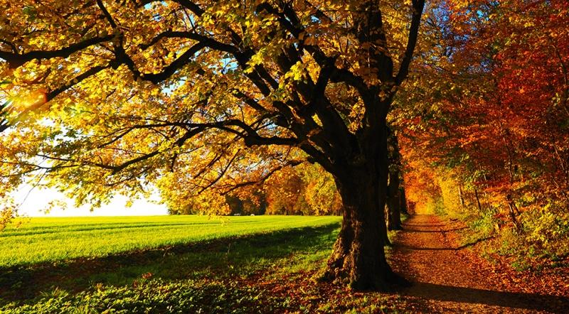 Sonbahar Doğa Manzaraları Kanvas Tablo
