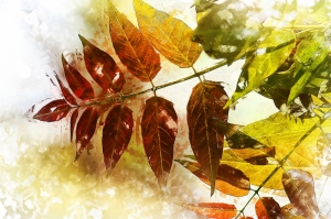 Sonbahar Floral Sanat Kanvas Tablo