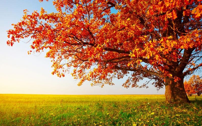 Sonbahar, Kızıl Yapraklar Kanvas Tablo