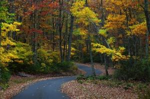 Sonbahar Kızıl Yeşil Sararmış Ağaçlar Doğa Manzaraları Kanvas Tablo