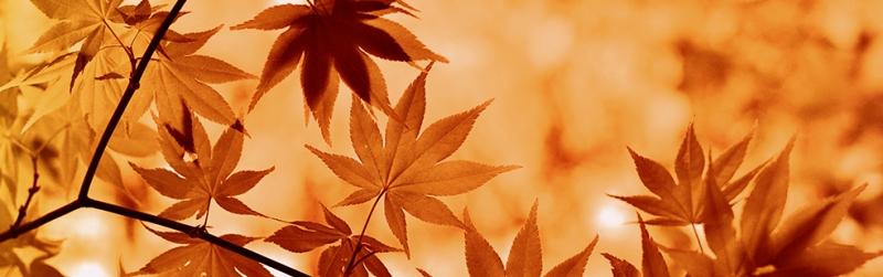 Sonbahar Panaromik Doğa Manzaraları Kanvas Tablo