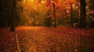Sonbahar Sarı Yapraklar ve Romantik Yağmur Kanvas Tablo