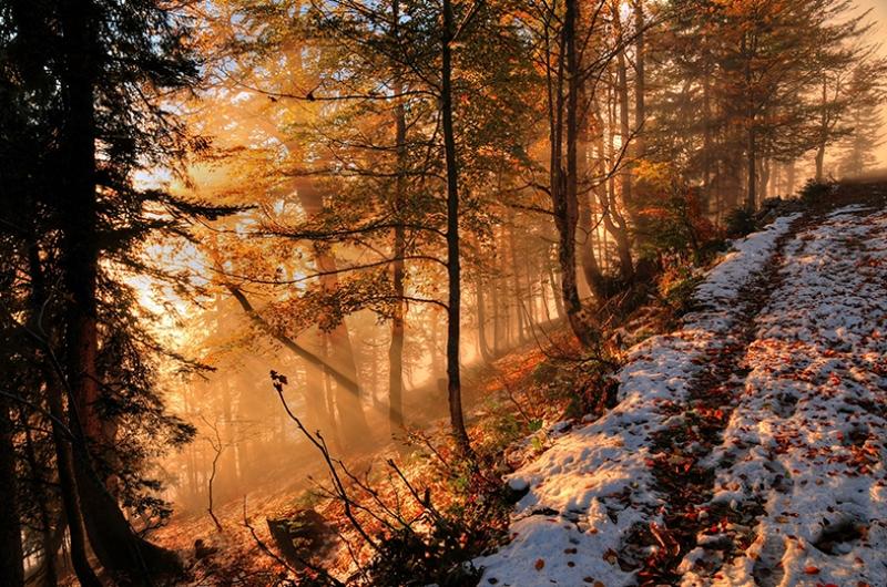 Sonbahar ve Karlı Patika Doğa Manzaraları Kanvas Tablo