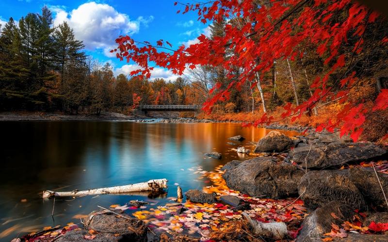 Sonbahar ve Yapraklar Doğa Manzaraları Kanvas Tablo