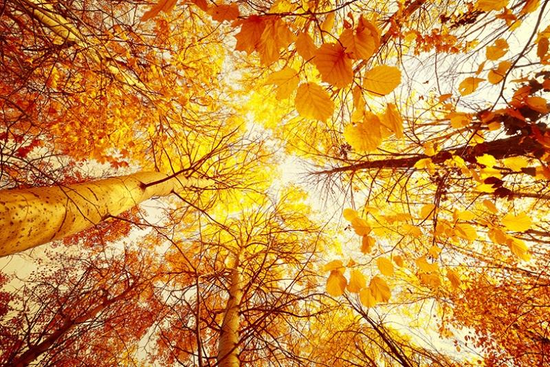 Sonbahar ve Yapraklar Kanvas Tablo