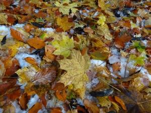 Sonbahar Yapraklar Doğa Manzaraları Kanvas Tablo