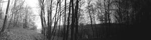 Sonbaharda Orman Siyah Beyaz Panaroma Panaromik Manzara Kanvas Tablo