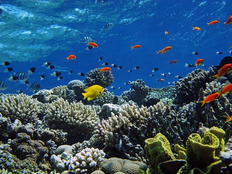 Su Altı Balık Mercan Manzara Kanvas Tablo