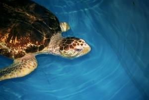 Su Kaplumbağası 1 Hayvanlar Kanvas Tablo