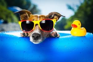 Tatilci Köpek Hayvanlar Kanvas Tablo