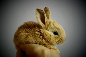 Tavşan 2 Hayvanlar Kanvas Tablo