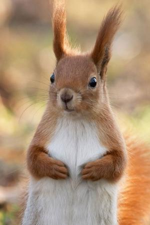 Tavşanlar Hayvanlar Kanvas Tablo