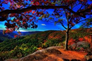 Tepeden Kuş Bakışı Yeşil Orman Renkli Ağaç Yaprakları Doğa Manzaraları Kanvas Tablo