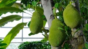 Tropik Meyveler Lezzetler Kanvas Tablo