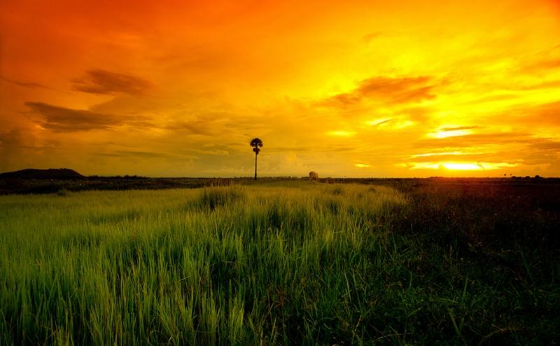 Turuncu Gökyüzü Doğa Manzaraları Kanvas Tablo