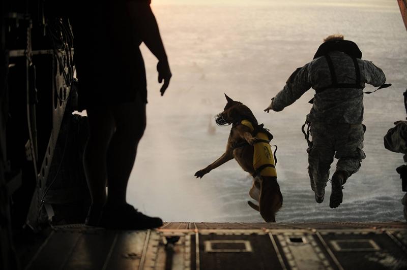 Uçaktan Atlayan Asker ve Köpek Askeri Kanvas Tablo