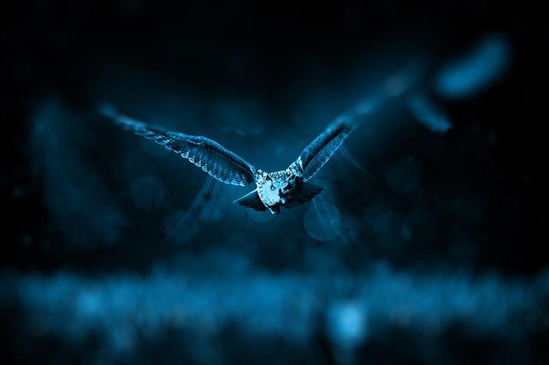 Uçan Baykuş 2 Hayvanlar Kanvas Tablo