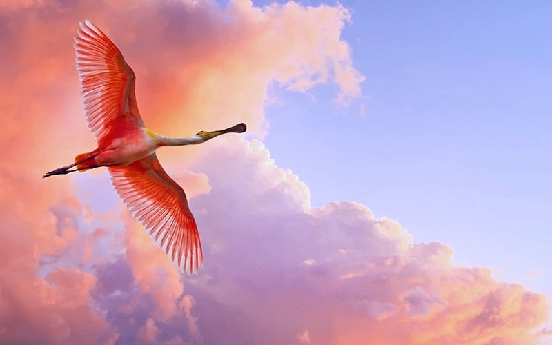 Uçan Flamingo Hayvanlar Kanvas Tablo