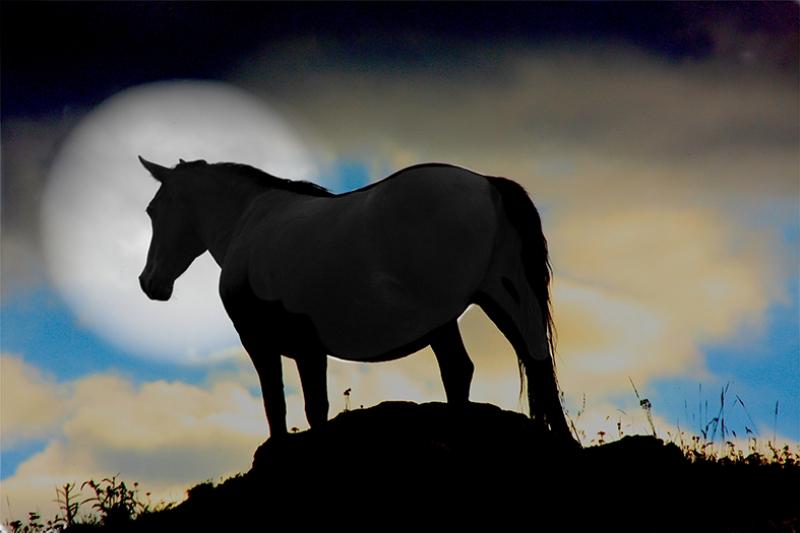 Unicorn At ve Dolunay Hayvanlar Kanvas Tablo