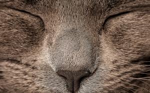 Uyuyan Kedi 2 Hayvanlar Kanvas Tablo
