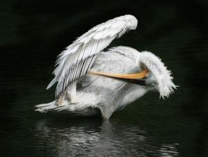 Uzun Gagalı Balıkçıl Kuş Hayvanlar Kanvas Tablo