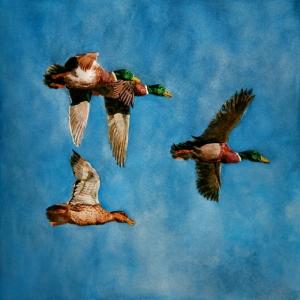 Yaban Ördekleri Sürüsü Dekoratif Canvas Tablo