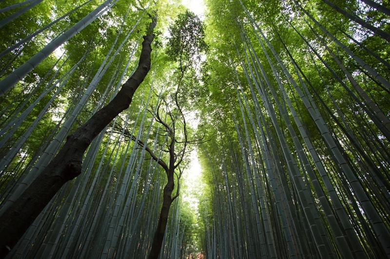 Yağmur Ormanı Doğa Manzaraları Kanvas Tablo