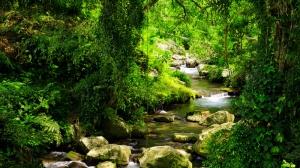 Yağmur Ormanları Doğa Manzaraları Kanvas Tablo