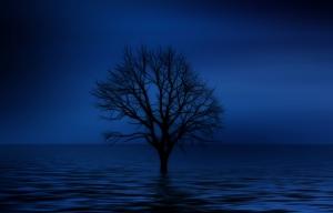 Yalnız Ağaç Fotoğraf Kanvas Tablo