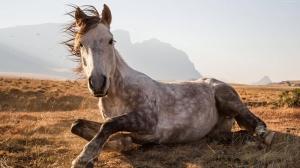 Yaşlı At Hayvanlar Kanvas Tablo