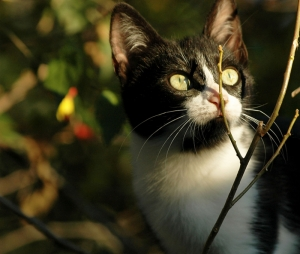 Yavru Kedi Hayvanlar Kanvas Tablo