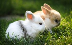 Yavru Tavşanlar Hayvanlar Kanvas Tablo