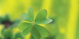 Yeşil Çiçek Floral Kanvas Tablo