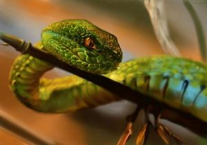Yeşil Yılan Fantastik Hayvanlar Kanvas Tablo