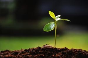 Yeşillenen Bir Bitki Fotoğraf Kanvas Tablo