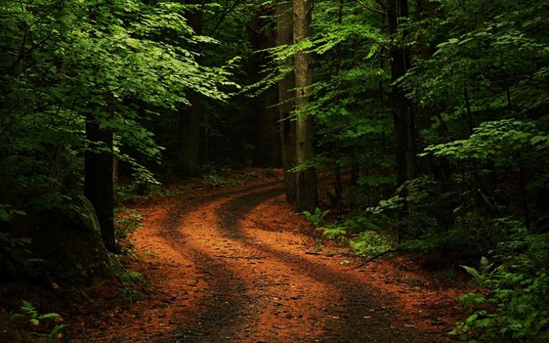 Yeşillikler İçinde Orman Yolu Kanvas Tablo