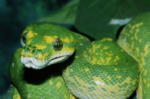 Yılanlar 2 Yeşil Yılan Hayvanlar Kanvas Tablo