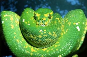 Yılanlar 3 Yeşil Yılan Hayvanlar Kanvas Tablo