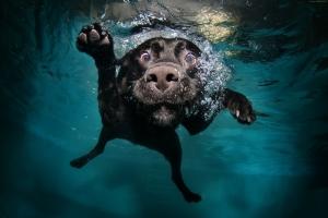 Yüzden Köpek Hayvanlar Kanvas Tablo