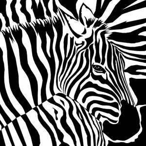 Zebra Hayvanlar Kanvas Tablo