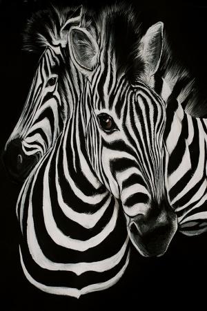 Zebralar-44 Hayvanlar Kanvas Tablo